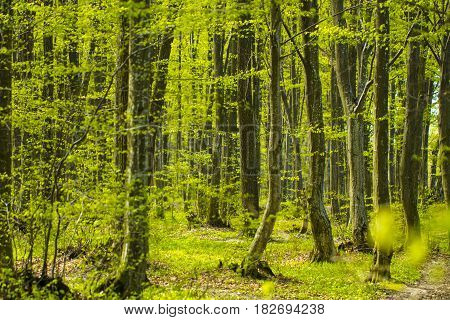 Forest trees. The nature green wood backgrounds.