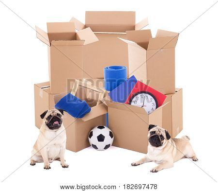brown cardboard boxes with different stuff and cute dogs isolated on white background