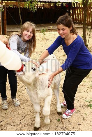 teen girls with white calf feeding him with mild bottle close up photo