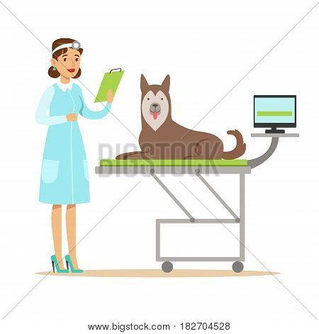 Smiling female veterinarian examining dog in vet clinic. Colorful cartoon character Illustration isolated on a white background