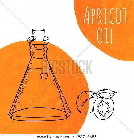 Hand drawn apricot oil bottle with orange watercolor spots. Isolated cute decanter with healthy cooking oil and apricots. Sketchy doodle illustration for aroma therapy, cosmetic, organic shop.