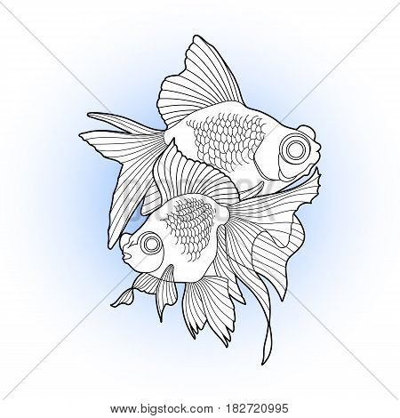Graphic couple of telescope fishdrawn in line art style. Vector freshwater creature isolated on white background. T-shirt print, tattoo design or coloring page for adults and kids