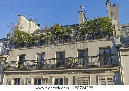 Balcony decorated with flowers bushes and small trees in tubs. Paris France
