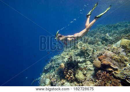 Woman snorkeling underwater looks over coral reef with colorful marine life composed by corals and many fish. Traveling active lifestyle concept.