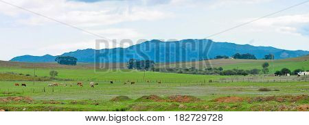 LANDSCAPE, OPEN FIELD IN FORE GROUND AND MOUNTAINS AND CLOUDS IN THE BACK GROUND 20xxcf