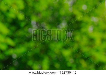 Natural blurred bokeh background from tree foliage.