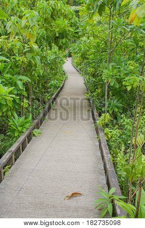 Concrete pathway or walkway in green forest.