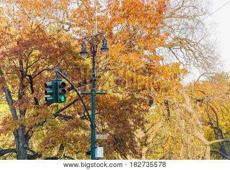 traffic light with trees in central park New York
