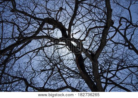 The spring sun breaks through the branches of a tree without foliage