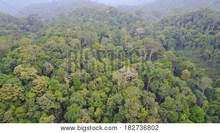 Rainforest from above. Aerial drone view of tropical jungle (rain forest) in Thailand