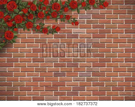 Bush climbing rose on a brick wall background. Scarlet flowers hang in the corner.