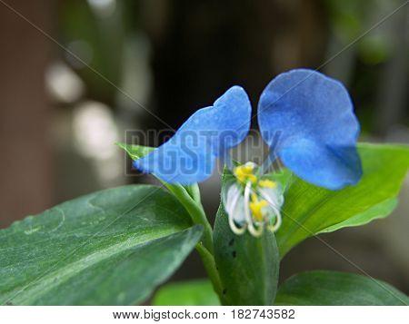 Flor azul hojas verdes fotografía plano detalles