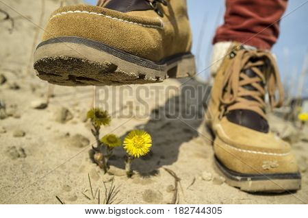 Concept of environmental protection: Person in shoes steps on the spring yellow flowers in the sand destroying them. Close-up on a background of blue sky.