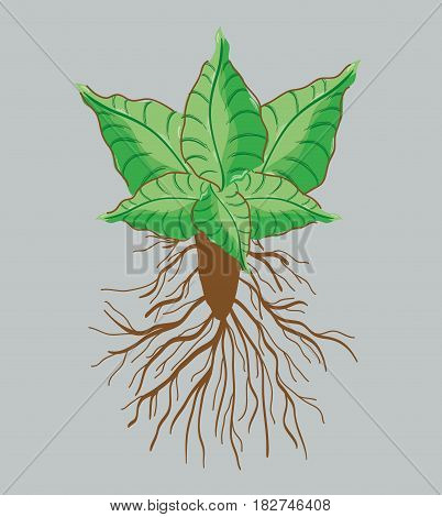 green nice plant decoration botany, vector illustration