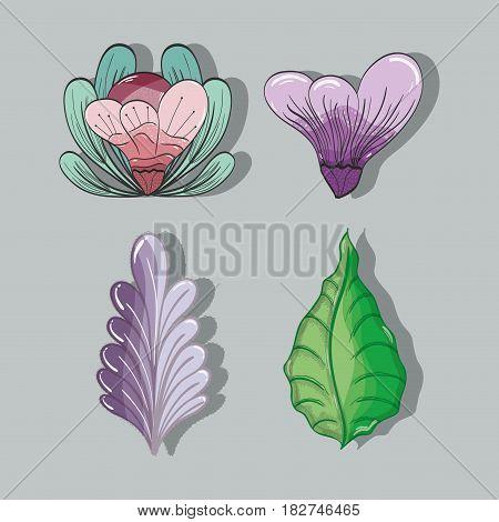 flowers and leaves plants herbal botany set, vector illustration