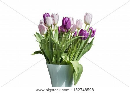 Spring bouquet of pink and white tulips isolated on the white background in a bucket version 3