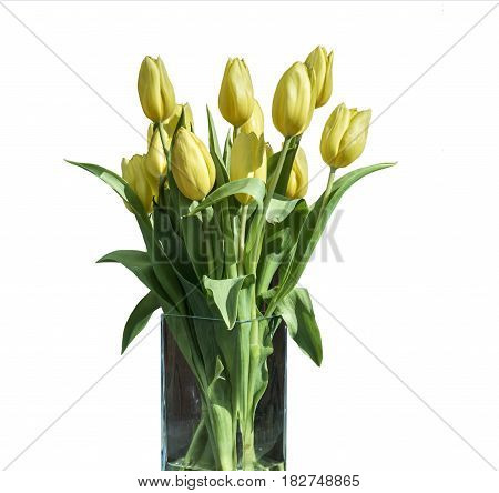 Spring bouquet of yellow tulips isolated on the white background in a bucket version 4