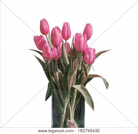 Spring bouquet of pink tulips isolated on the white background in a bucket version 2