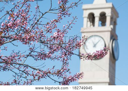Springtime in Ankara, Turkey - Blossoms and clock tower