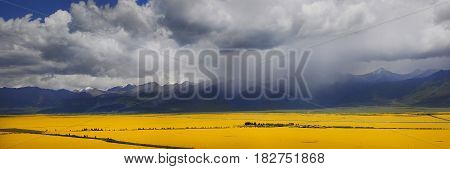 Panorama Of The Valley Of Yellow Flowers