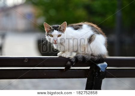 Speckled cat sits in the park on the back of a chair.