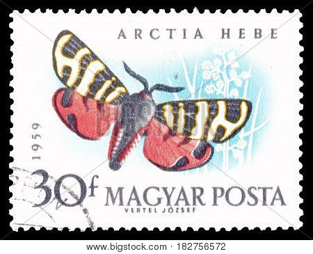 HUNGARY - CIRCA 1959 : Cancelled postage stamp printed by Hungary, that shows Arctia Hebe butterfly.