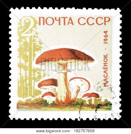 SOVIET UNION - CIRCA 1968 : Cancelled postage stamp printed by Soviet Union, that shows Butter mushroom.