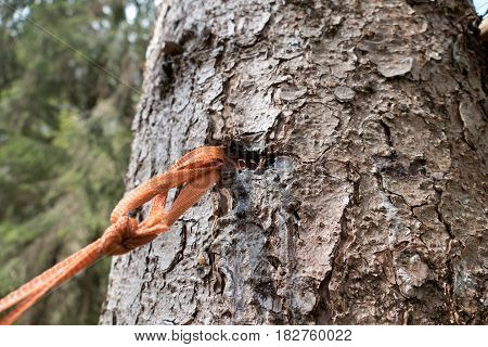 Piece Of Rope In A Tree Wood Skin