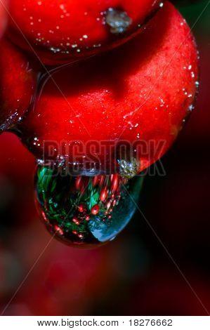 Nandina Berry Drop