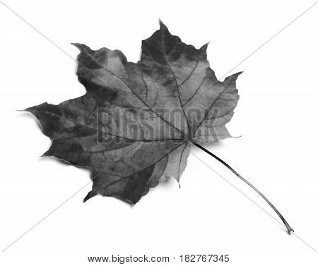 Black And White Maple-leaf
