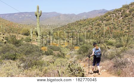 A Woman Hikes the Go John Trail Cave Creek Regional Park Cave Creek Arizona