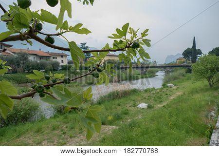 Bridge Over Sarca River In Arco