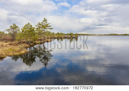 Landscape of a lake reflecting cloudy sky trees grown at water edge in a marsh