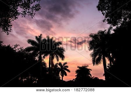 Miami Purple and Pink Silhouette Sunset with Palm Trees