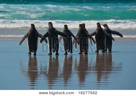 Group Of King Penguins On The Beach