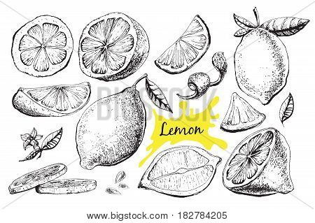 Vector hand drawn lime or lemon set. Whole lemon, sliced pieces, half, leafe and seed sketch. Fruit engraved style illustration. Detailed citrus drawing. Great for water, juice, detox drink
