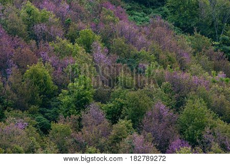 Deciduous Forest In Autumn Colors. Seasonal Change Temperate Forest Concept.