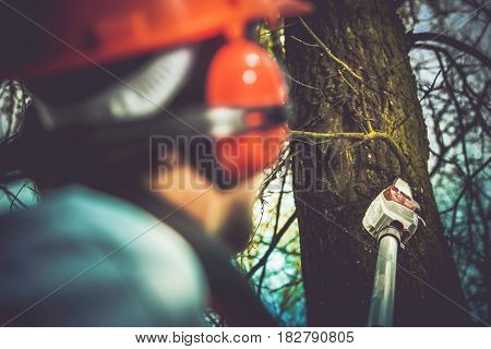 Taking Care of Trees by Removing Damaged and Dead Tree Branches Using Electric Wood Cutter on Extended Pole. Professional Gardener Job.