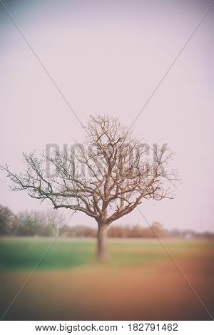 A leafless tree in early spring on a field.