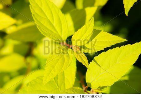 beautiful autumn colored plant. nature