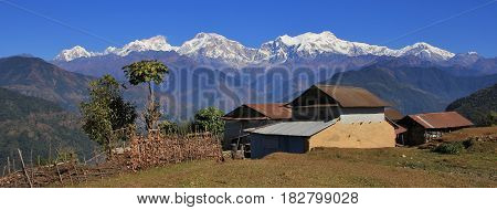 Scene on the way to Ghale Gaun Nepal. Houses and fig tree in front of snow capped mountains. Manaslu range.