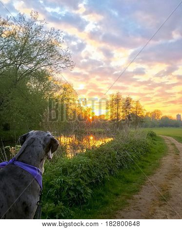 An evening walk by the river with Willow