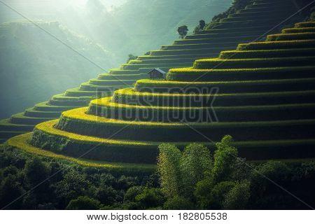 Vietnam Rice fields on terraced in rainy season at Mu cang chai Vietnam. Rice fields prepare for transplant at Northwest Vietnam