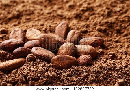 Aromatic cocoa beans on powder background