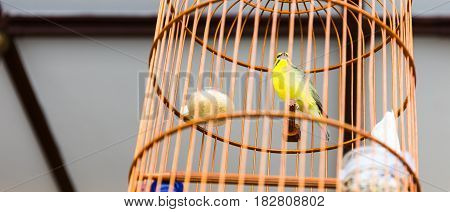 Yellow Bird In Wooden Cage