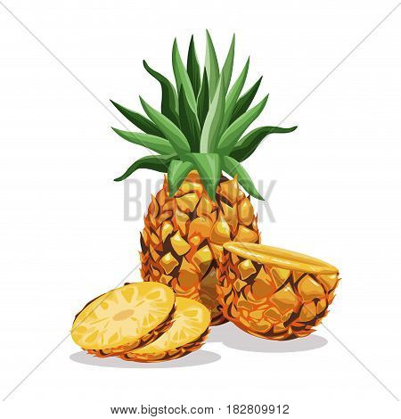 pineapple fruit fresh harvest vector illustration eps 10