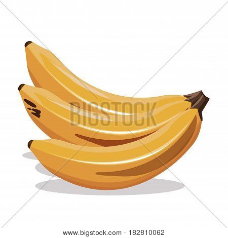 banana fruit fresh harvest vector illustration eps 10