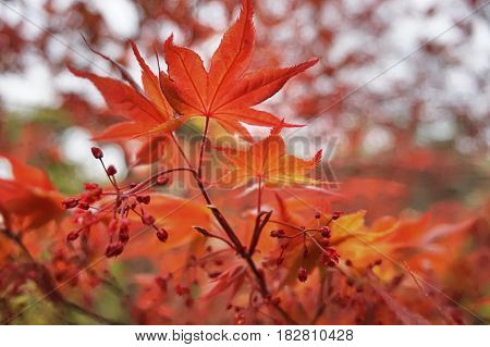 A season with beauty colours as gold