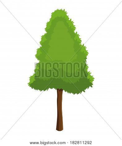 tree pine plant natural conservation vector illustration eps 10
