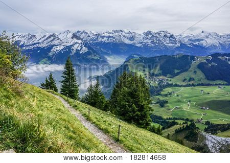 The walk way on the mountain with tree green grass and alp with snow in the background